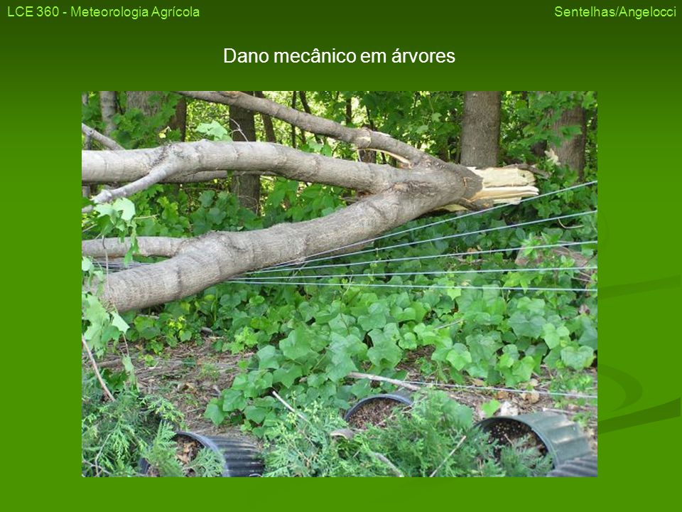Dano mecânico em árvores