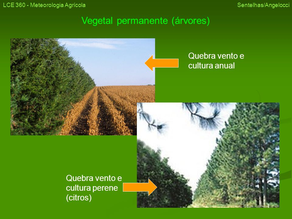 Vegetal permanente (árvores)