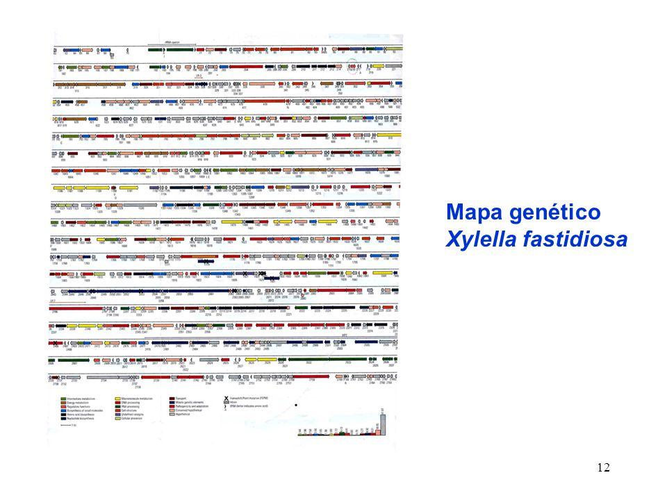 Mapa genético Xylella fastidiosa