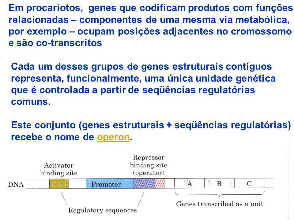 Em procariotos, genes que codificam produtos com funções