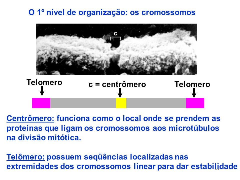 O 1º nível de organização: os cromossomos