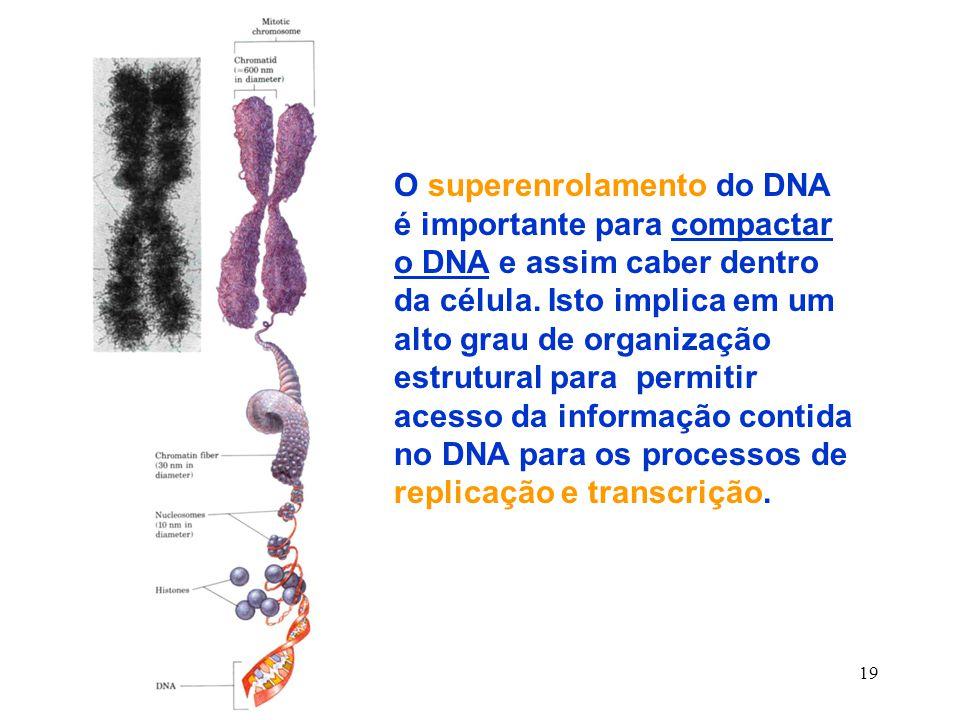 O superenrolamento do DNA é importante para compactar o DNA e assim caber dentro da célula.