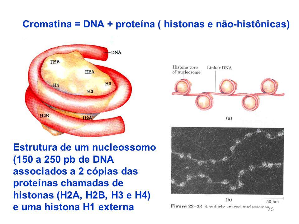 Cromatina = DNA + proteína ( histonas e não-histônicas)