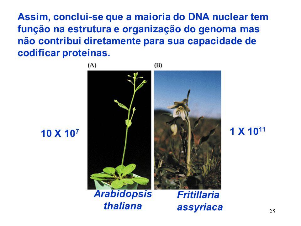 Assim, conclui-se que a maioria do DNA nuclear tem função na estrutura e organização do genoma mas não contribui diretamente para sua capacidade de codificar proteínas.
