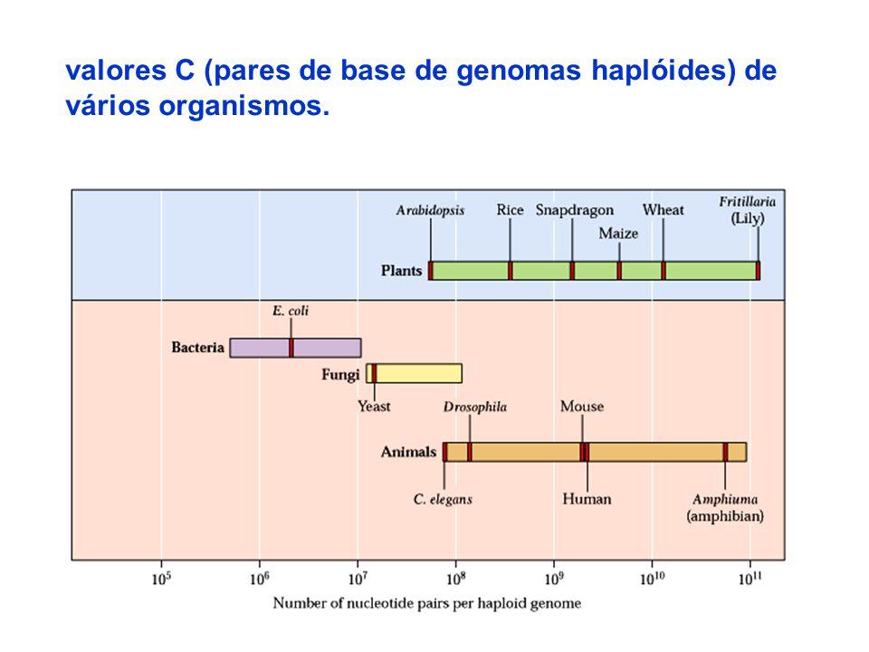 valores C (pares de base de genomas haplóides) de
