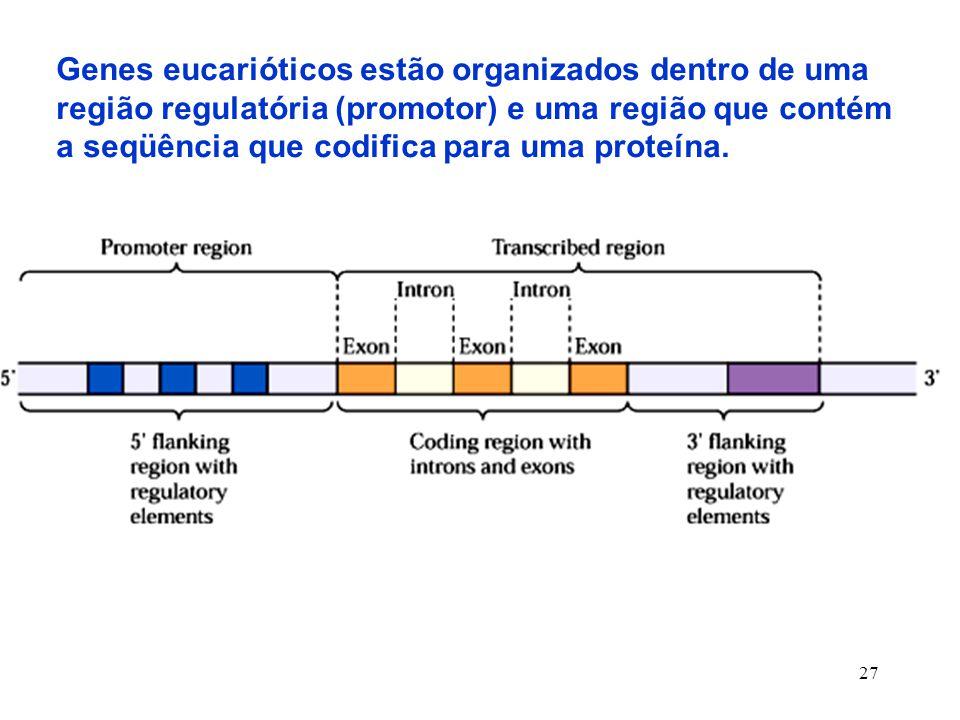 Genes eucarióticos estão organizados dentro de uma