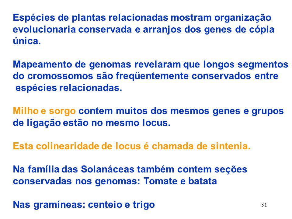 Espécies de plantas relacionadas mostram organização