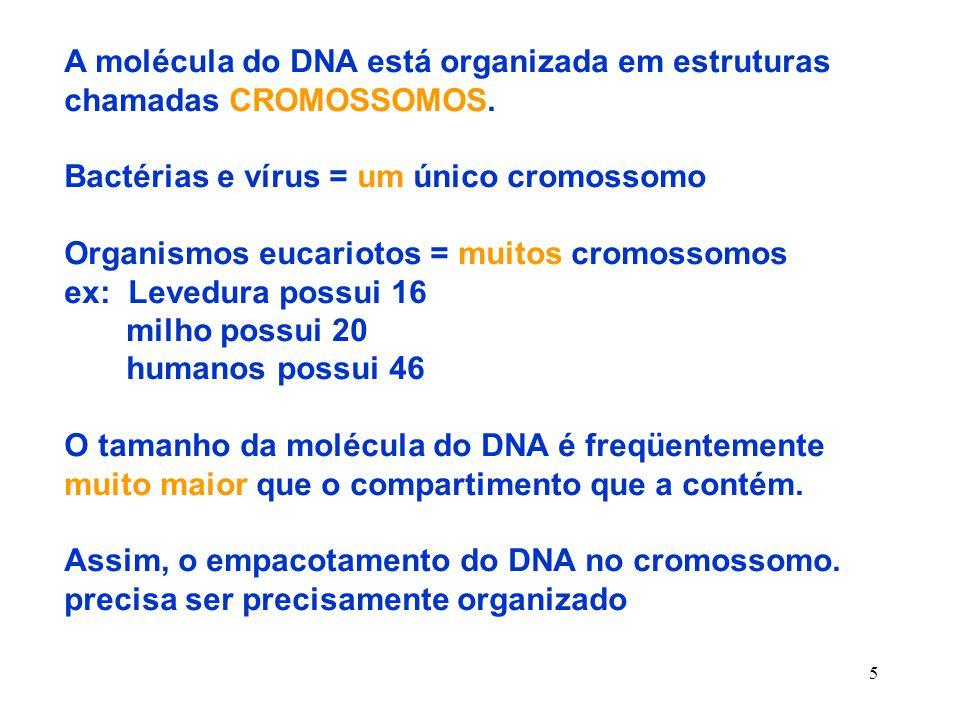 A molécula do DNA está organizada em estruturas chamadas CROMOSSOMOS.