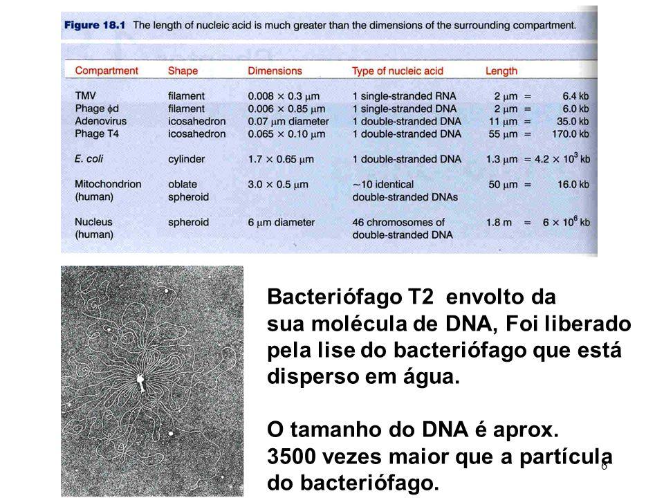 Bacteriófago T2 envolto da