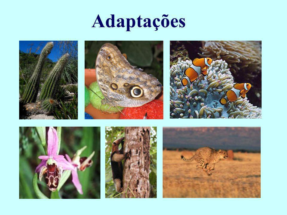 Adaptações