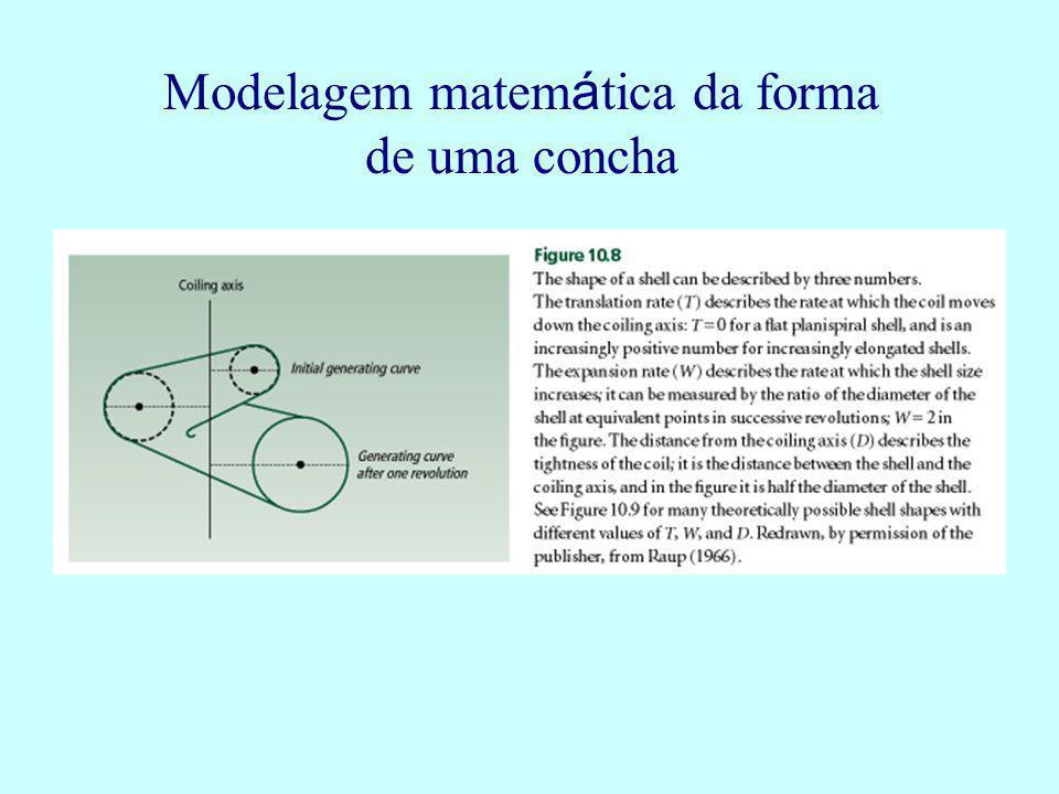 Modelagem matemática da forma de uma concha