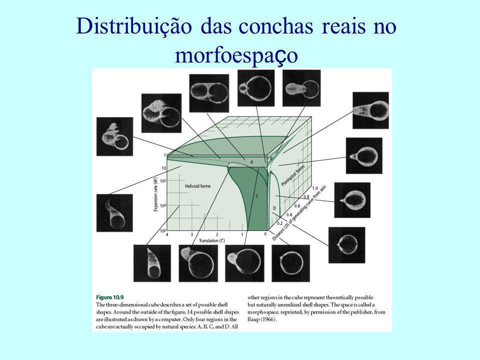 Distribuição das conchas reais no morfoespaço