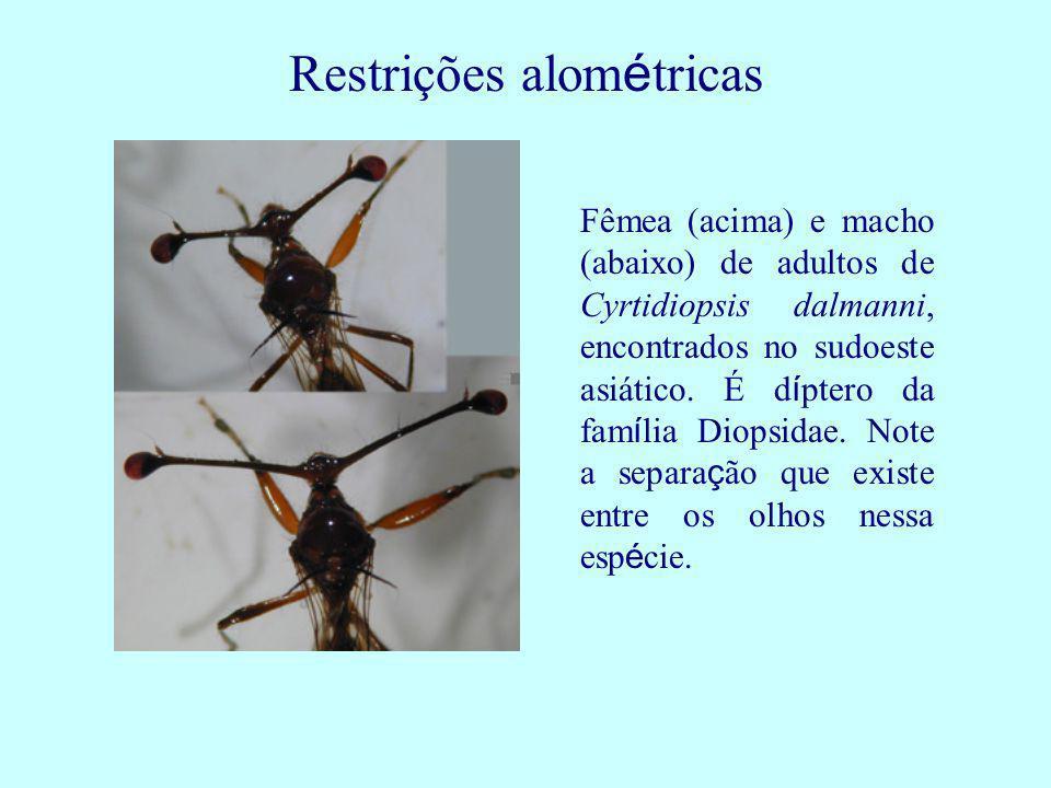 Restrições alométricas