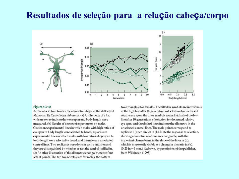 Resultados de seleção para a relação cabeça/corpo