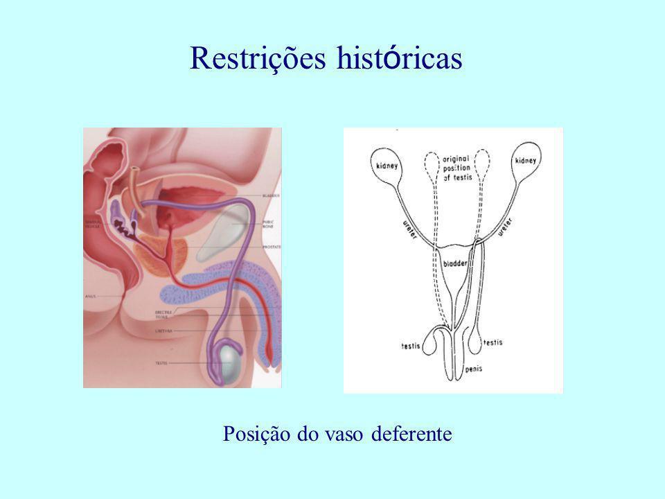 Restrições históricas