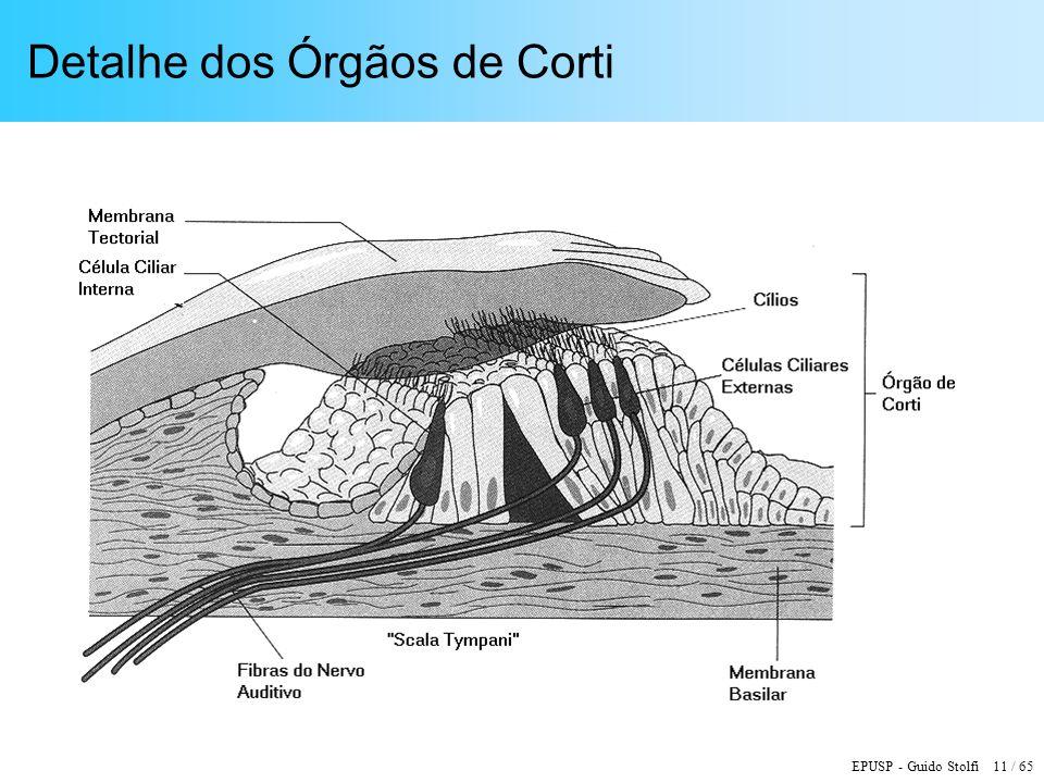 Detalhe dos Órgãos de Corti