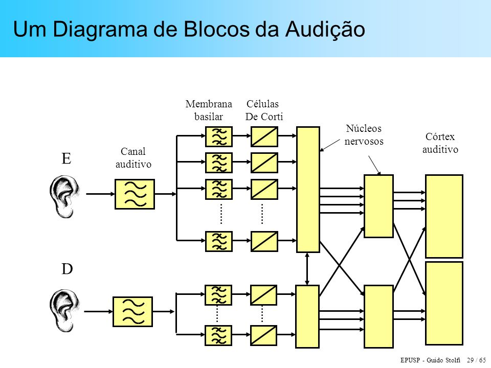 Um Diagrama de Blocos da Audição