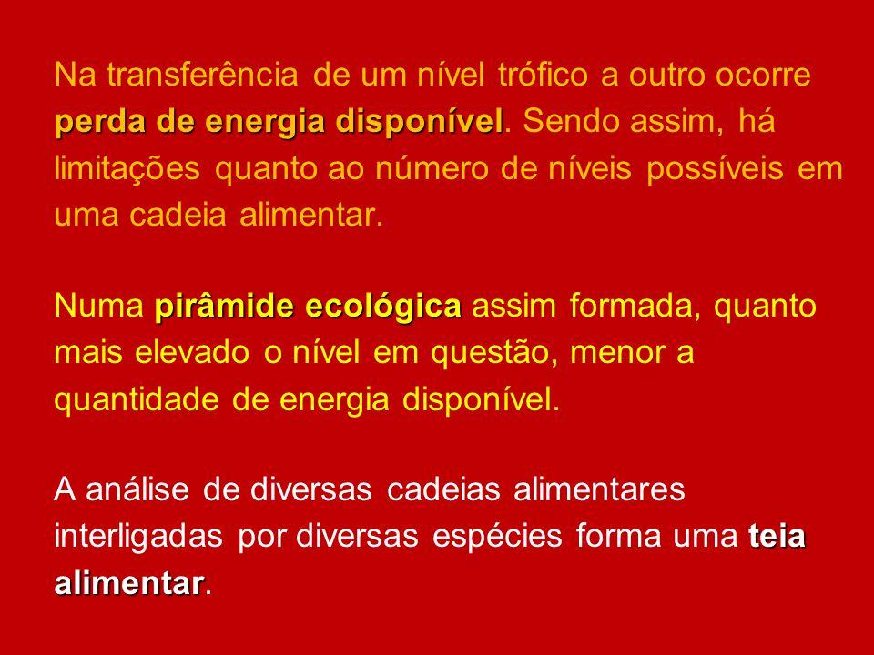 Na transferência de um nível trófico a outro ocorre perda de energia disponível. Sendo assim, há limitações quanto ao número de níveis possíveis em uma cadeia alimentar.