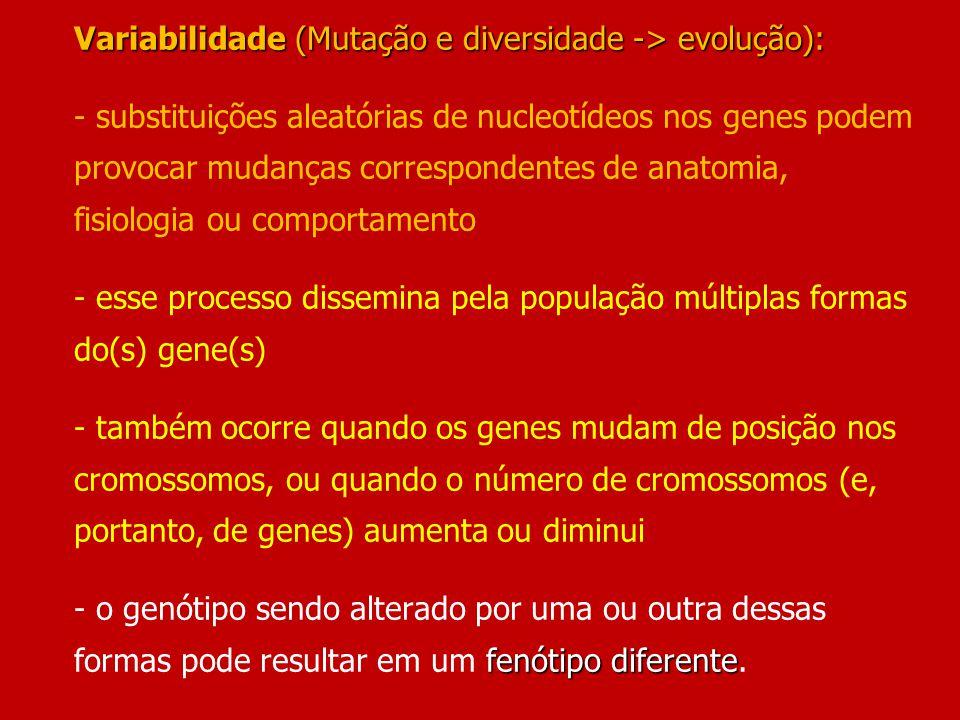 Variabilidade (Mutação e diversidade -> evolução): - substituições aleatórias de nucleotídeos nos genes podem provocar mudanças correspondentes de anatomia, fisiologia ou comportamento - esse processo dissemina pela população múltiplas formas do(s) gene(s) - também ocorre quando os genes mudam de posição nos cromossomos, ou quando o número de cromossomos (e, portanto, de genes) aumenta ou diminui - o genótipo sendo alterado por uma ou outra dessas formas pode resultar em um fenótipo diferente.