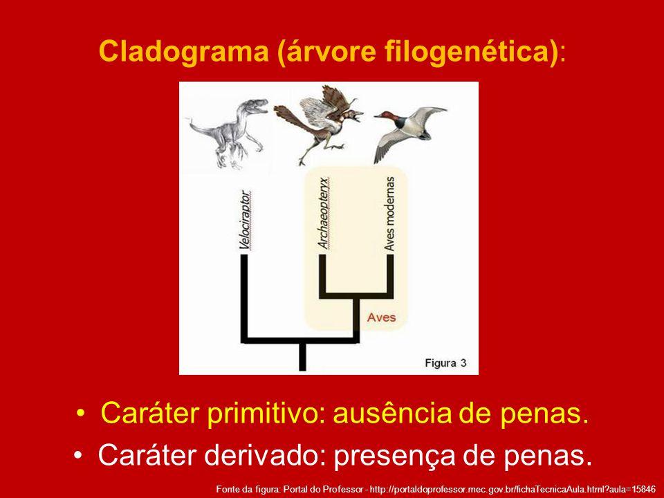 Cladograma (árvore filogenética):