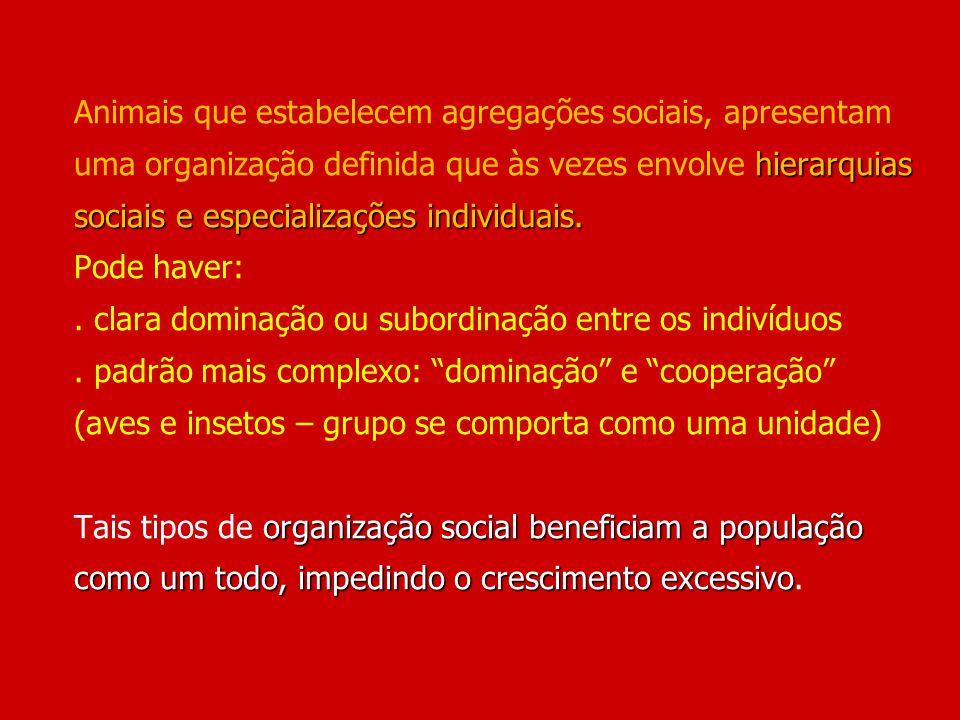 Animais que estabelecem agregações sociais, apresentam uma organização definida que às vezes envolve hierarquias sociais e especializações individuais.