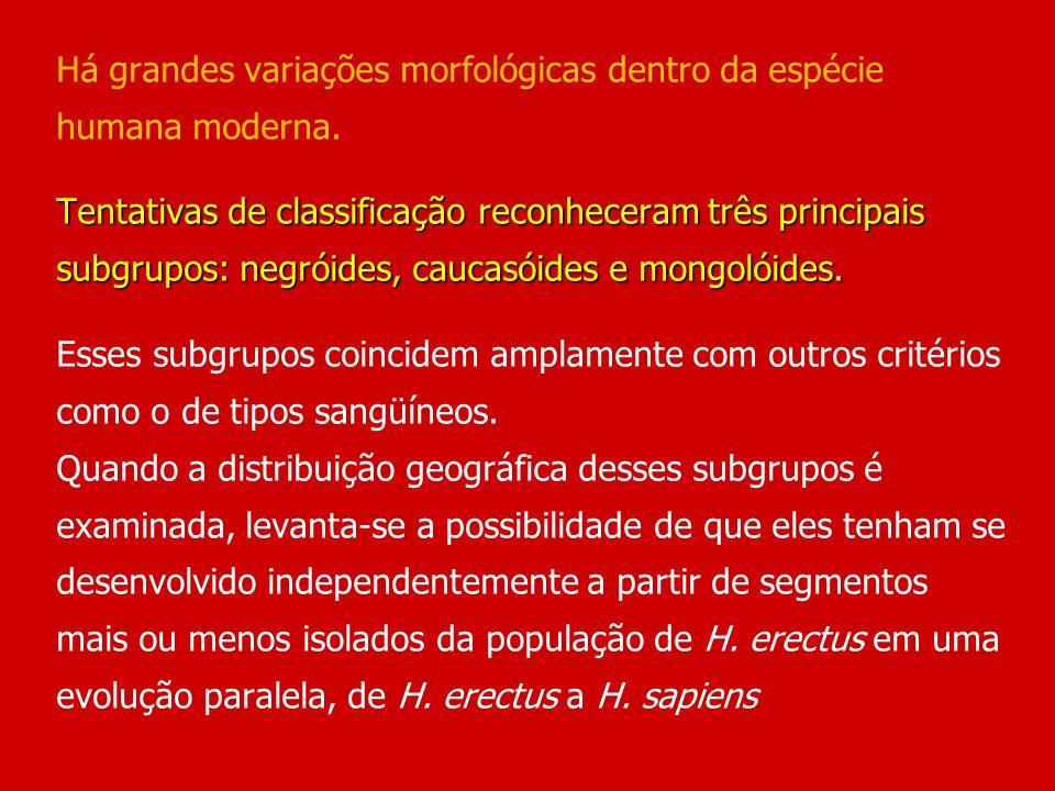 Há grandes variações morfológicas dentro da espécie humana moderna