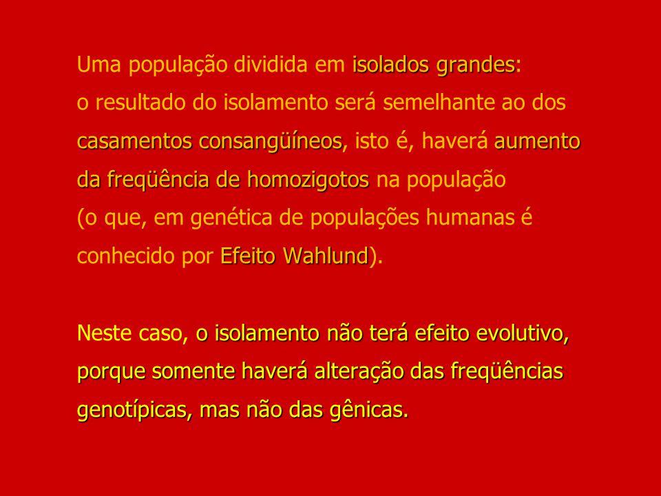 Uma população dividida em isolados grandes: o resultado do isolamento será semelhante ao dos casamentos consangüíneos, isto é, haverá aumento da freqüência de homozigotos na população (o que, em genética de populações humanas é conhecido por Efeito Wahlund).