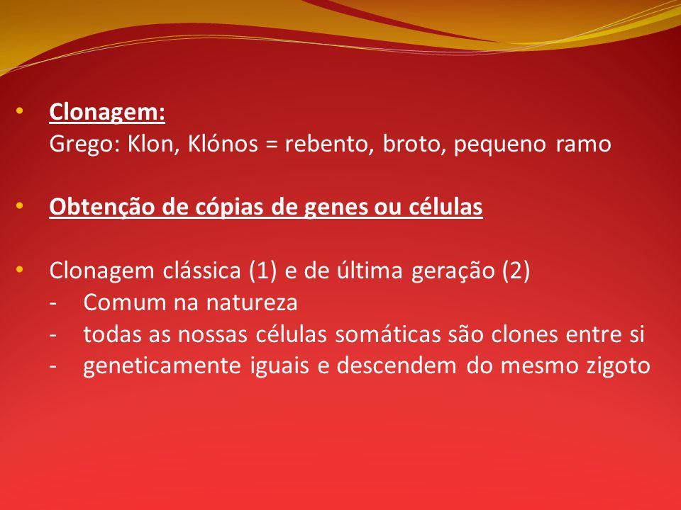 Clonagem: Grego: Klon, Klónos = rebento, broto, pequeno ramo. Obtenção de cópias de genes ou células.