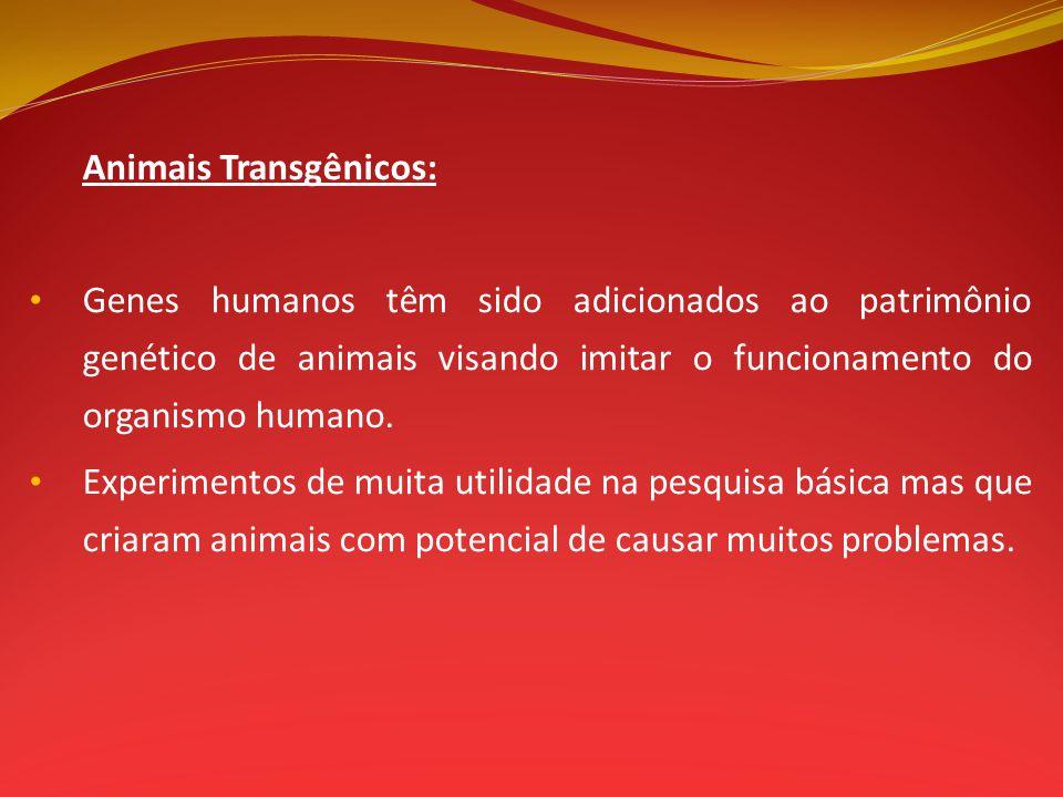 Animais Transgênicos: