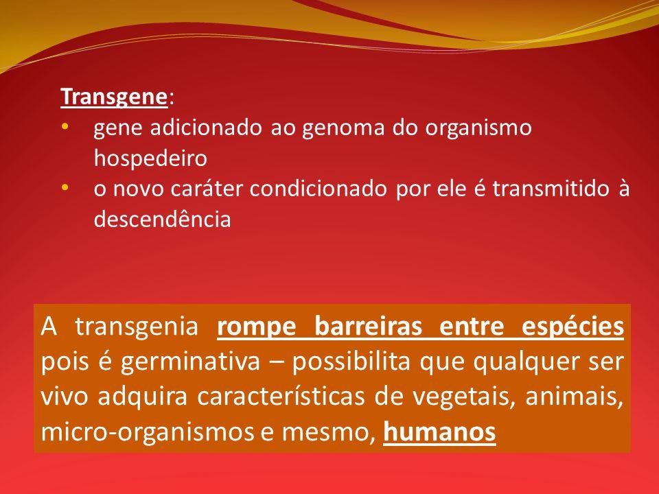 Transgene: gene adicionado ao genoma do organismo hospedeiro. o novo caráter condicionado por ele é transmitido à descendência.