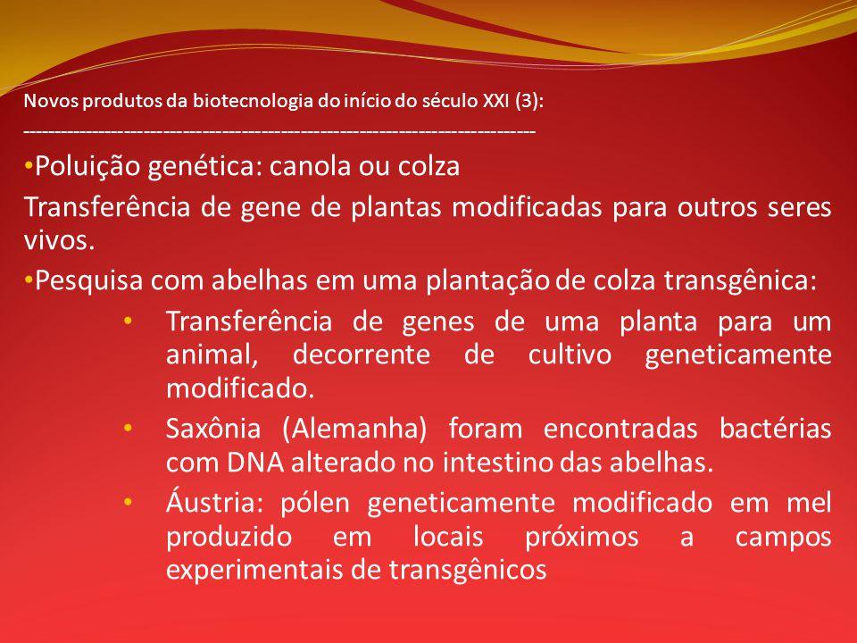 Poluição genética: canola ou colza