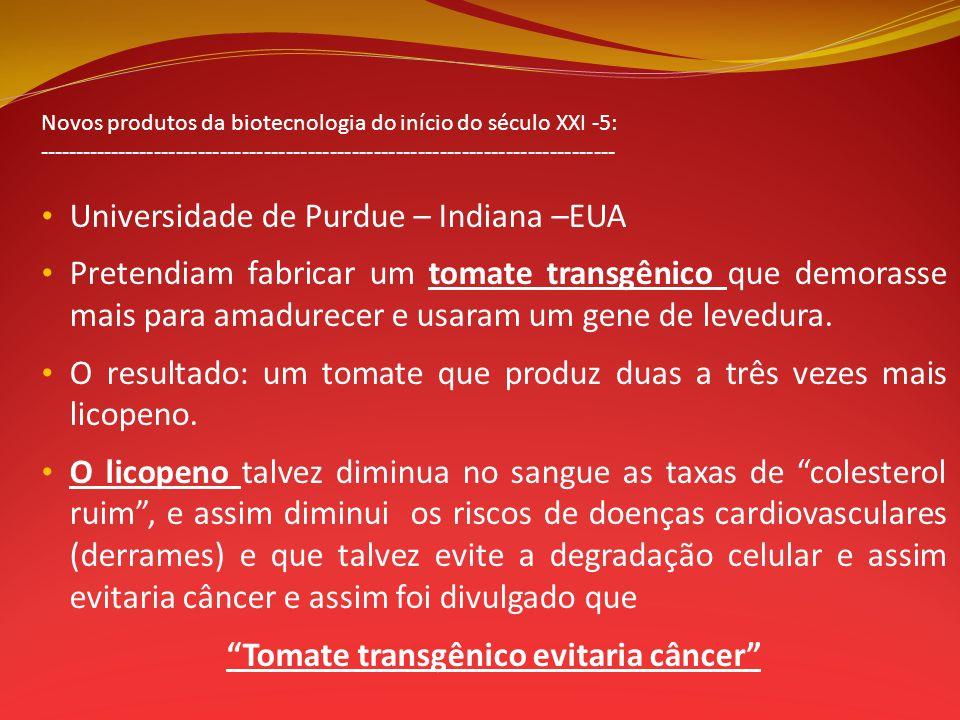 Tomate transgênico evitaria câncer