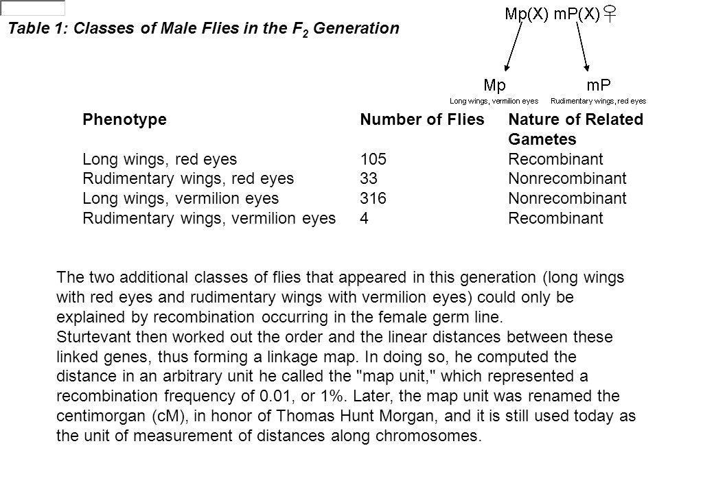 Table 1: Classes of Male Flies in the F2 Generation