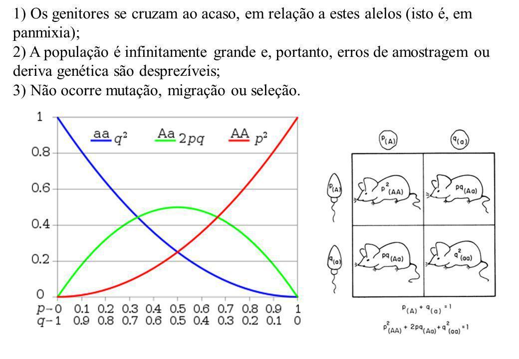 1) Os genitores se cruzam ao acaso, em relação a estes alelos (isto é, em panmixia);