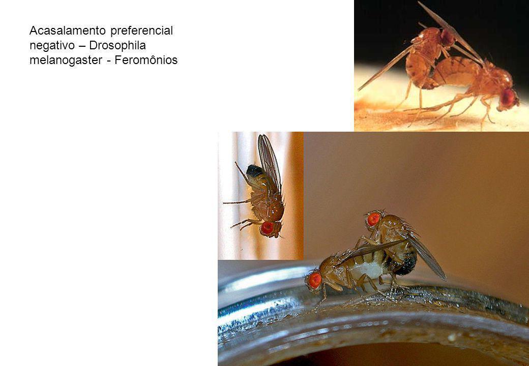 Acasalamento preferencial negativo – Drosophila melanogaster - Feromônios