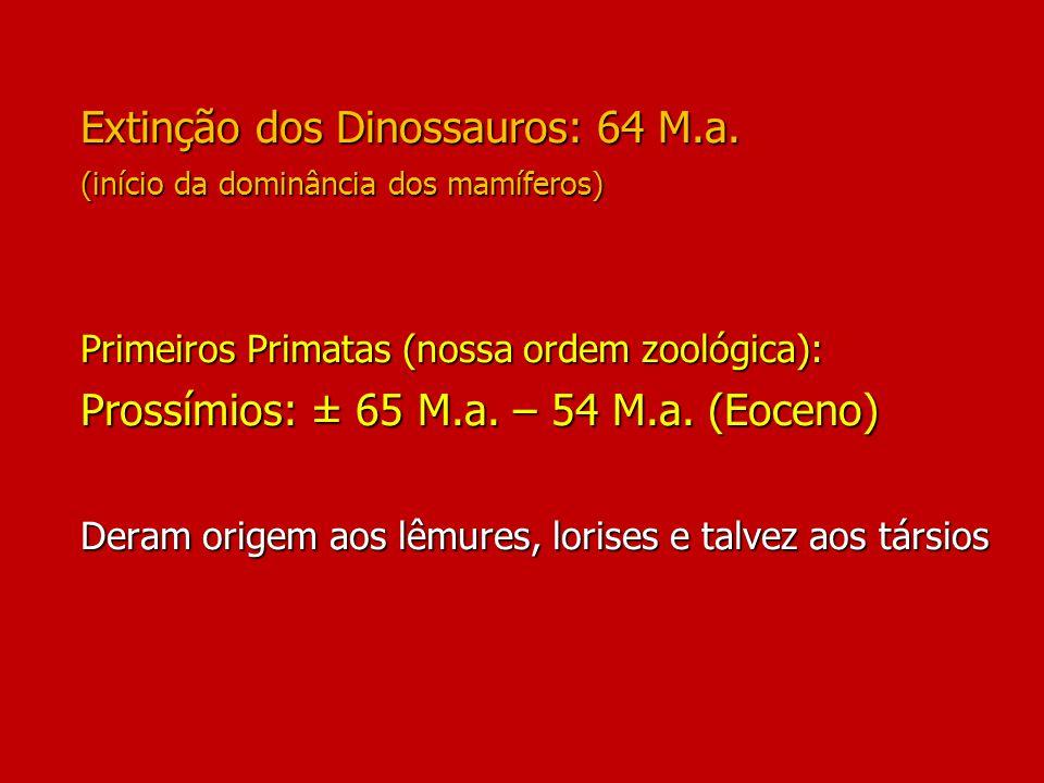 Extinção dos Dinossauros: 64 M. a