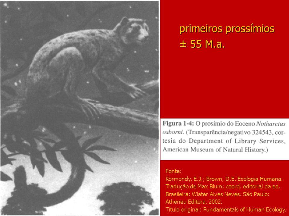 primeiros prossímios ± 55 M.a.