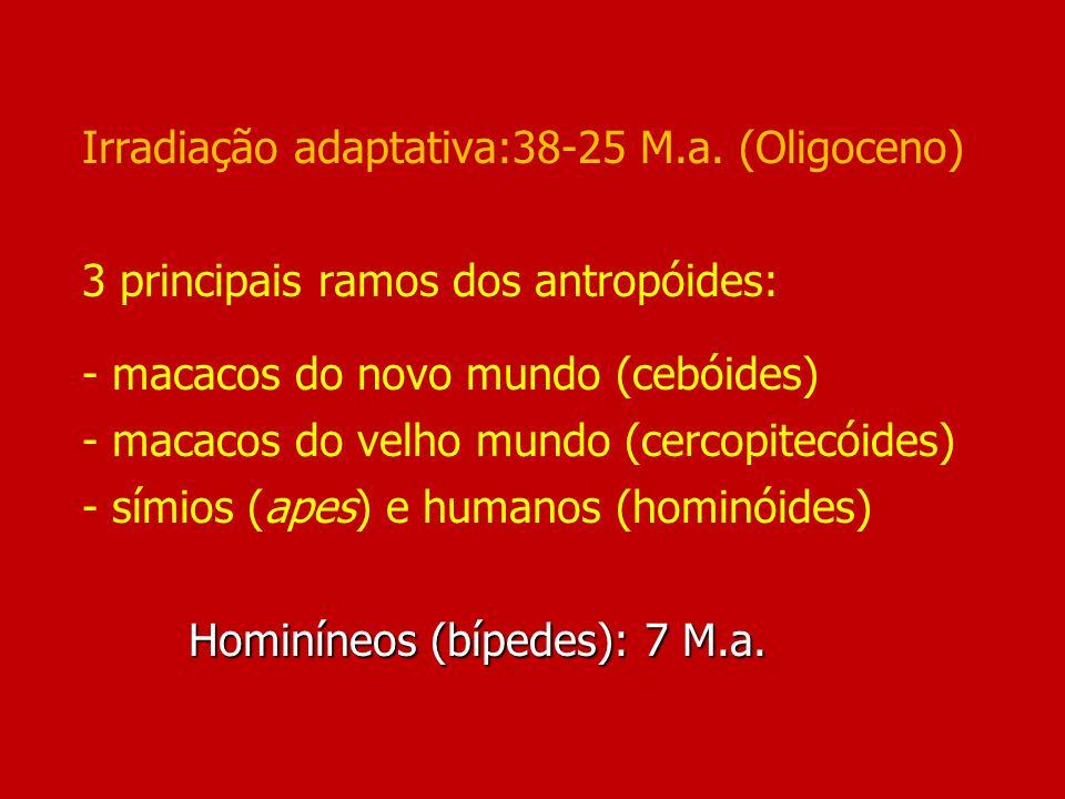 Irradiação adaptativa:38-25 M. a