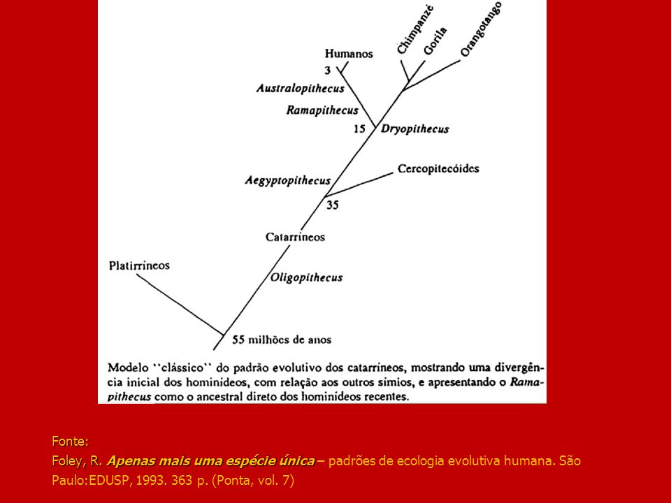 Fonte: Foley, R. Apenas mais uma espécie única – padrões de ecologia evolutiva humana.