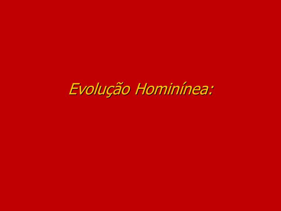 Evolução Hominínea: