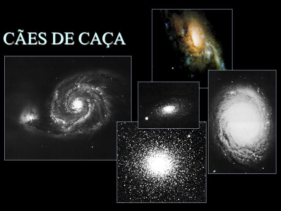 CÃES DE CAÇA