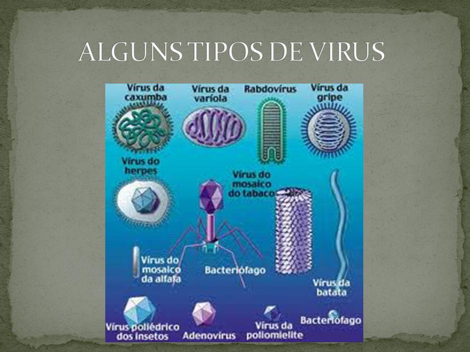ALGUNS TIPOS DE VIRUS