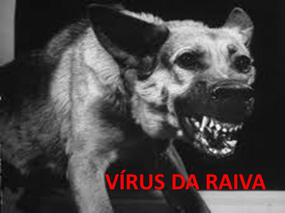 VÍRUS DA RAIVA