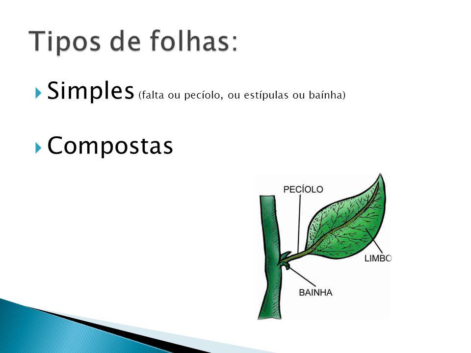 Tipos de folhas: Simples (falta ou pecíolo, ou estípulas ou baínha)