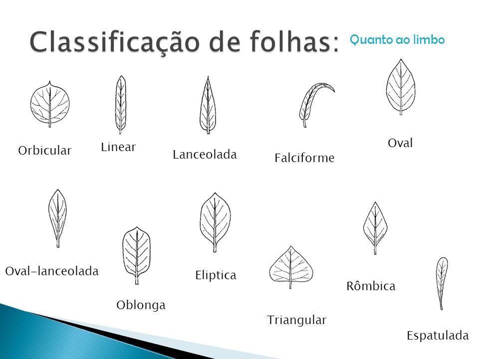 Classificação de folhas: