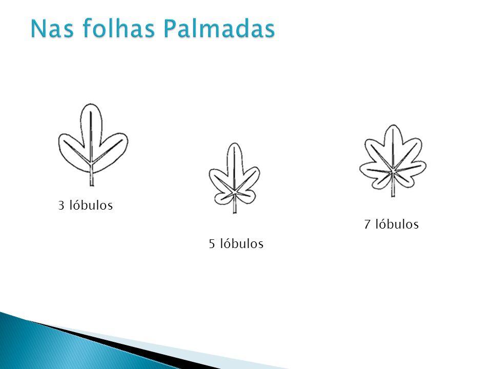 Nas folhas Palmadas 3 lóbulos 7 lóbulos 5 lóbulos