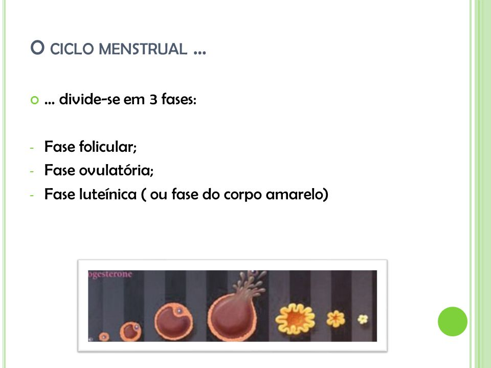 O ciclo menstrual … … divide-se em 3 fases: Fase folicular;