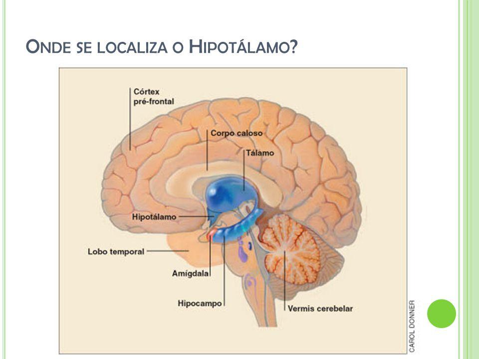 Onde se localiza o Hipotálamo