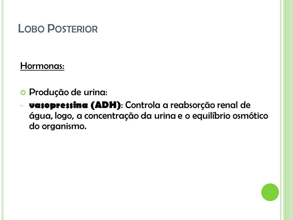 Lobo Posterior Hormonas: Produção de urina: