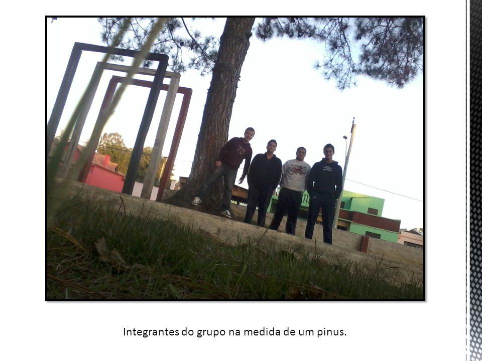 Integrantes do grupo na medida de um pinus.